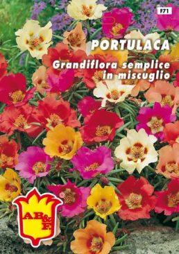 PORTULACA Doppio Mix