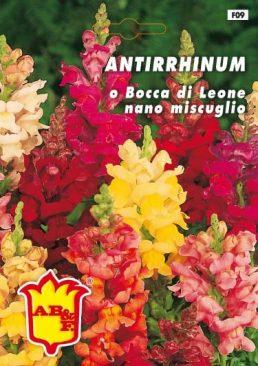 ANTHIRHINUM Bocca di leone nana mix